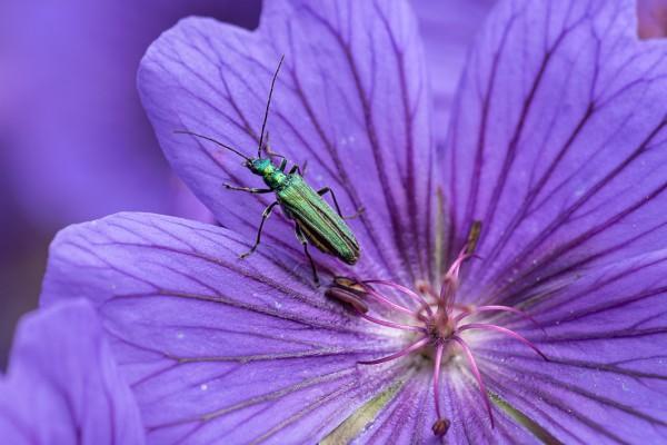 20200611-insekten-01430-bearbeitet427331A6-0596-8EB1-23D9-BD3915180072.jpg